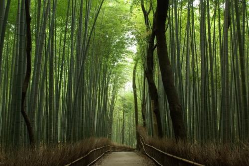 Arashiyama1[1].jpg
