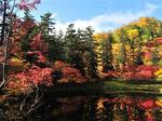 top_autumn2011[1].jpg
